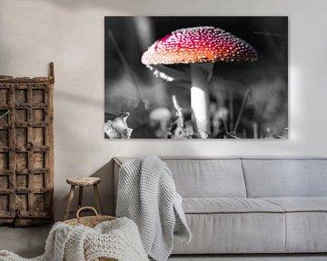 Champignon schwarz-weiß von Jeroen Mikkers