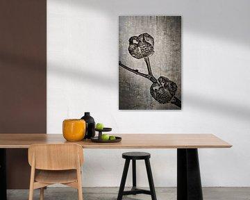 Weinraute - Ruta graveolens von Christophe Fruyt