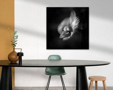 Orchidee in schwarz-weiß von Rene  den Engelsman