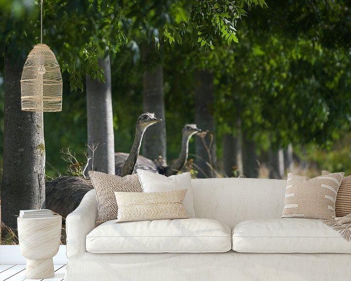 Impression: Deux nandous ou plus (Rhea americana) regardant à travers une rangée d'arbres dans un champ. Depuis  sur Maren Winter