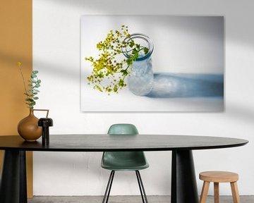 Glasvase mit Blumen aus Frauenmantel (Alchemilla) und blauem Schatten auf weißem Hintergrund mit Kop von Maren Winter