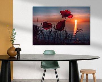 Mohnblumen im Sonnenuntergang von Marcus Lanz