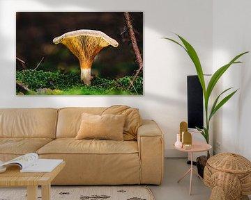 Sprookjesachtige paddenstoel in het herfstbos van MindScape Photography