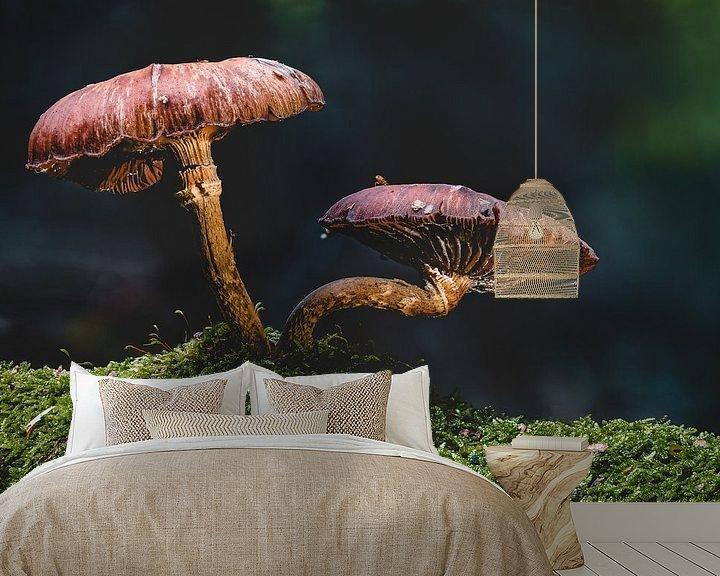 Sfeerimpressie behang: Sprookjesachtige paddenstoel in het herfstbos van MindScape Photography