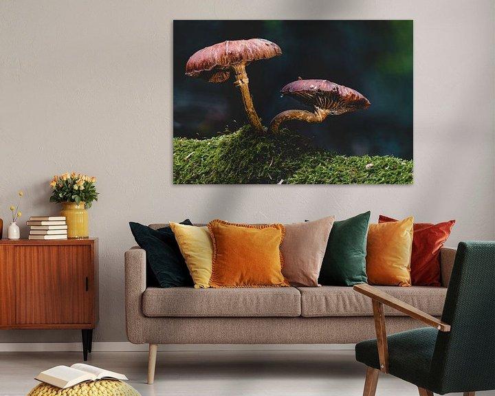 Sfeerimpressie: Sprookjesachtige paddenstoel in het herfstbos van MindScape Photography