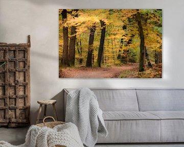 Pad door een beukenbos met gouden en gele bladeren tijdens de herfst van Sjoerd van der Wal