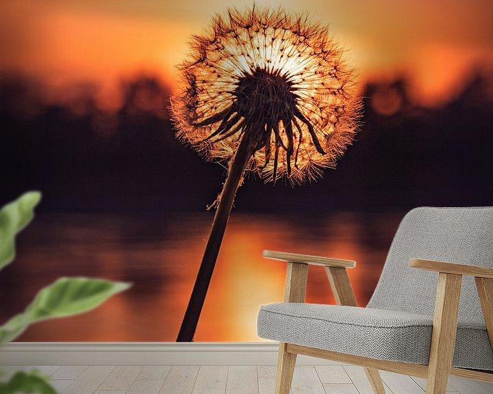 Beispiel fototapete: Pusteblume im Abendlicht von Marcus Lanz