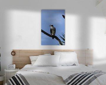 Fischadler - Osprey van Christiane Schulze