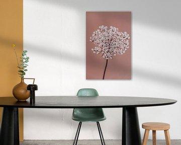 Holunderblüte altrosa von Aminda