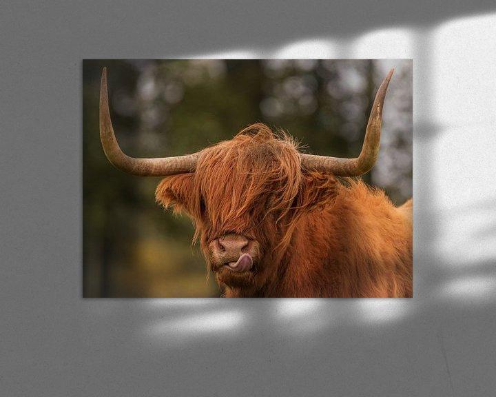 Impression: Highlander écossais sur Photo by Krista
