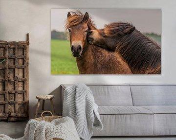 De doux poneys sur Photo by Krista