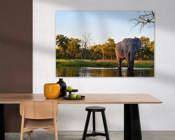 Eléphant dans le delta de l'Okavango sur Amy Huibregtse