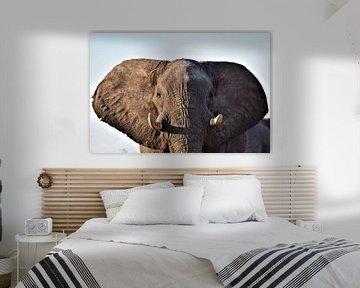 Elefanten-Portrait von Amy Huibregtse
