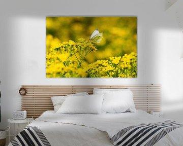 Weißer Schmetterling in Gelb von Merijn Loch