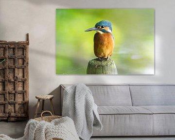 der Eisvogel mit seinen schönen Farben von Merijn Loch