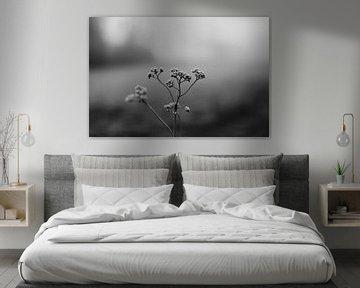Winterblume in Schwarz und Weiß von Eke Salomé