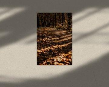 Herfstbos Nederland van Amber den Oudsten