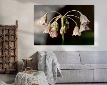 Hängende rosa Glockenblumen von Andie Daleboudt