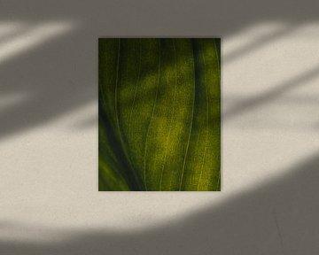 Grüne Adern #1 von Jeffrey Hoorns