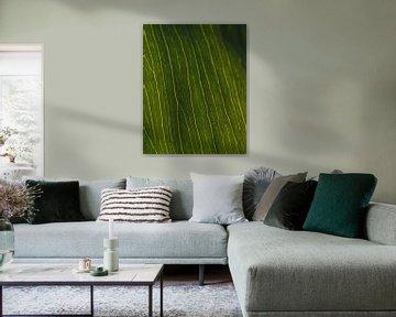 Grüne Adern #3 von Jeffrey Hoorns