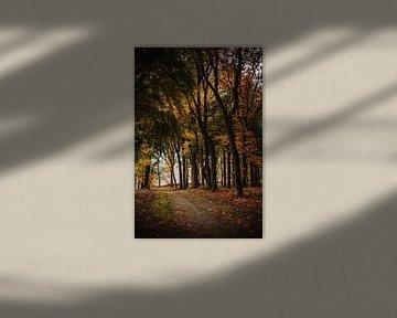 Regenachtige herfst in Rijssen van Holly Klein Oonk