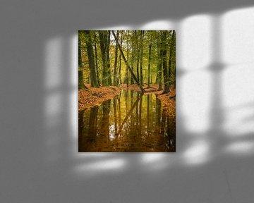 Hersft reflecties