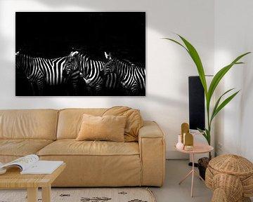 zebras van Francisco de Almeida