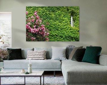 Mauerblümchen von Peter Eckert