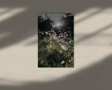 Ochtendlicht in het gras van Alieke Eising