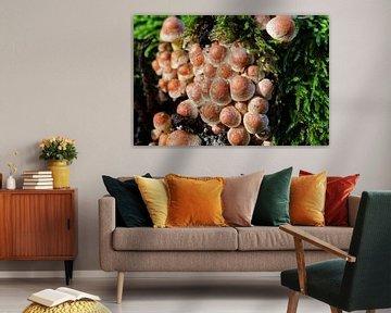 champignons sur Marieke Funke