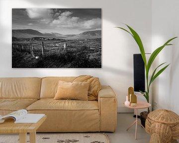 Irische Moorlandschaft (B&W) von Bo Scheeringa Photography
