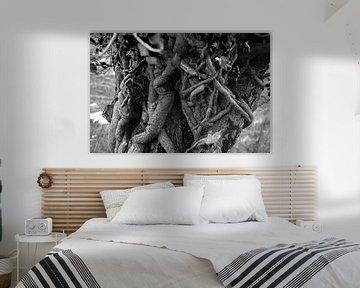sprookjesachtige boomstam in Ierland (b&w) van Bo Scheeringa Photography