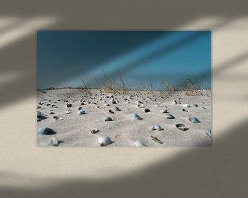 Muscheln im Sand von Timo Brodtmann Fotografie