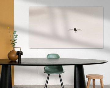 Schwebfliege im Licht von Jeffrey Hoorns