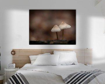 Pilze im Wald von Maikel Brands