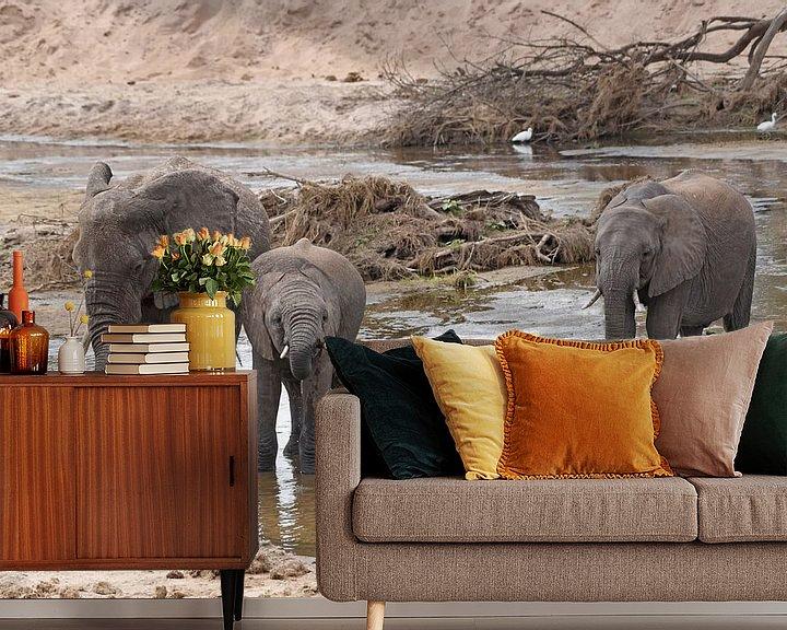 Impression: Faune : les éléphants d'Afrique se désaltèrent dans la rivière. sur Koolspix