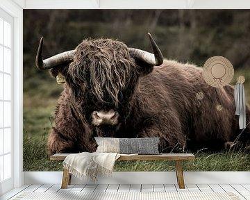 Schotse hooglander V van Marvin Van Haasen