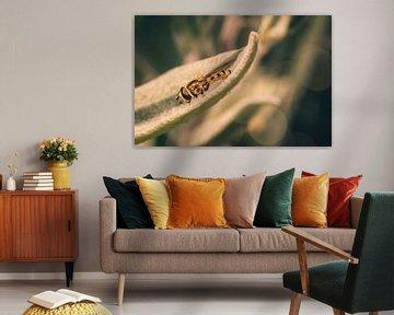 Schwebeflug im Ruhemodus von Jeffrey Hoorns