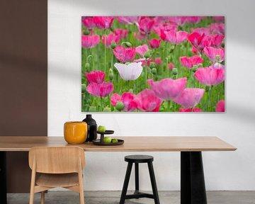 Natuur, Papaver (Poppy`s) Natuurfotografie van Henk Elshout