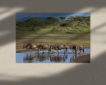 Les gnous lors de la grande migration en Tanzanie sur Anja Brouwer Fotografie
