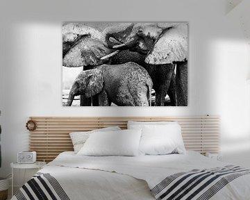 Natte, drinkende olifanten van Anja Brouwer Fotografie