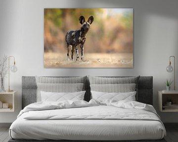 Wilde hond op de uitkijk van Anja Brouwer Fotografie