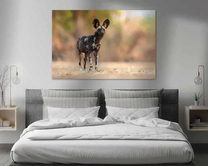 Sfeerimpressie: Wilde hond op de uitkijk van Anja Brouwer Fotografie