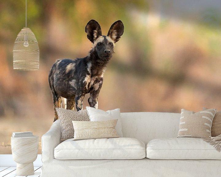 Sfeerimpressie behang: Wilde hond op de uitkijk van Anja Brouwer Fotografie