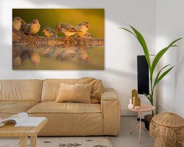 Vogeltjes in het warme ochtendlicht van Anja Brouwer Fotografie