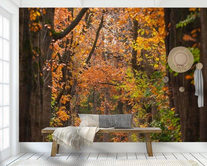Sfeerimpressie behang: Herfst Oisterwijkse Bossen van Ronne Vinkx