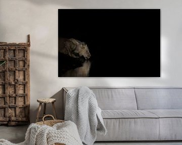 Trinkender Löwe in der Nacht von Anja Brouwer Fotografie