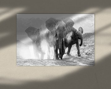 Elefanten nehmen Staubbad von Anja Brouwer Fotografie