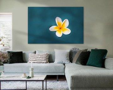 Zen bloem van Dennis Claessens