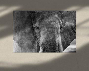 Stoffige olifant van Anja Brouwer Fotografie